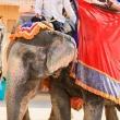 Elefante all'Amber Fort nei pressi di Jaipur, in Rajasthan, India