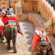 Elefanti all'Amber Fort nei pressi di Jaipur, in Rajasthan, India