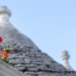 Fiore e Trulli ad Alberobello, Puglia