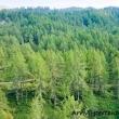 Foresta a Crampiolo presso l'Alpe Devero, Piemonte