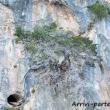 Natura nel Golfo di Orosei, Sardegna