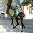 Mulo nei pressi di Pyrgos sull'isola di Santorini, Grecia