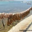Polipi stesi presso il porto di Paros, Grecia