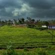 Fattoria, ghati occidentali, Kerala