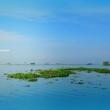 Vembanad lake, Kerala backwaters
