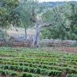 Orto-Masseria-Le-Stanzie-Supersano