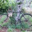 Bicicletta-Orto-Masseria-Le-Stanzie-Supersano