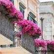 Balconi fioriti nel centro storico, Matera
