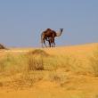 Adrar, da Chinguetti a Ouadane attraverso il deserto