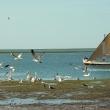 Iwik, Parc national Du Banc d'Arguin
