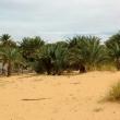 Oasi di Tanouchert, Mauritania