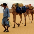Cammelliere con i suoi cammelli, Mauritania