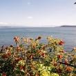 Fiori presso il lago Taupo, Nuova Zelanda