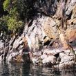 Natura nel Fiordo di Milford Sound, Nuova Zelanda