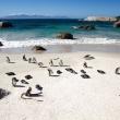 Pinguini, Boulders Beach