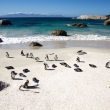 Pinguini, Boulders Beach