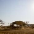 Pascolo, Swaziland
