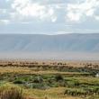 Cratere del Ngorongoro, Tanzania