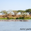 Ippopotami, Tanzania