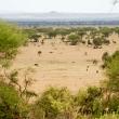 La savana, Tanzania