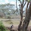 Pennuto, Tanzania