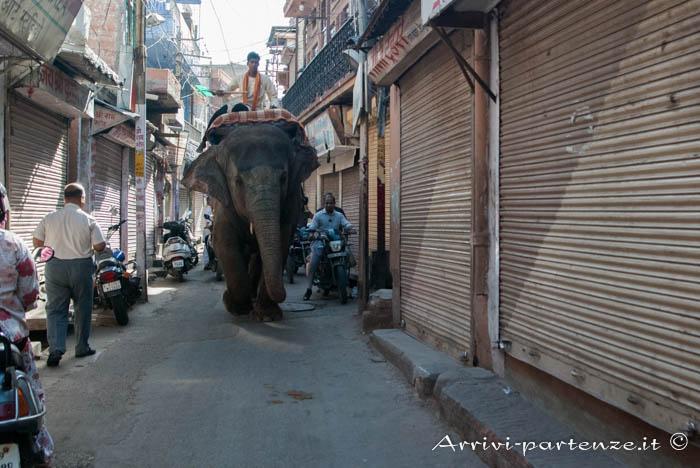Jodhpur, cosa vedere e dove dormire elefante in strada