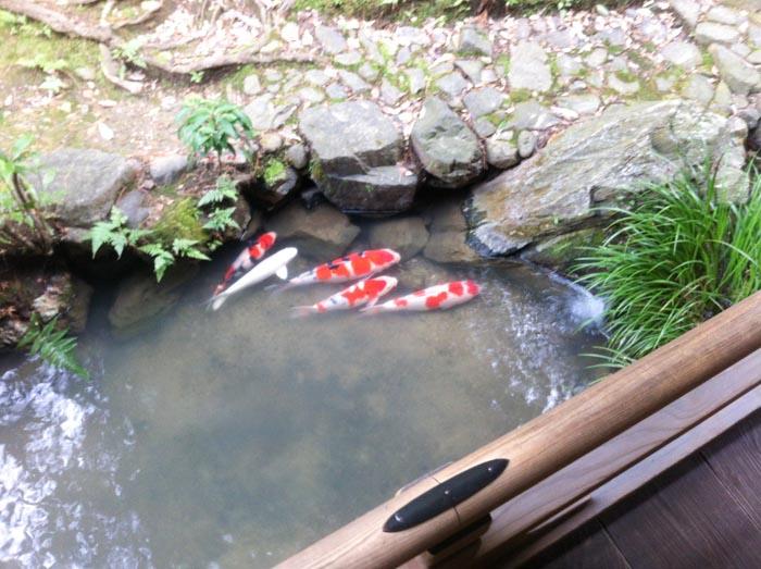 Visitare Kyoto