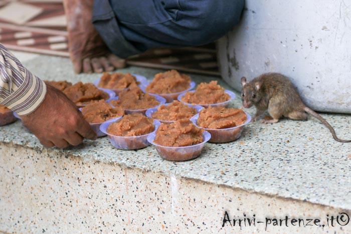 Karni Mata Temple: le offerte di cibo
