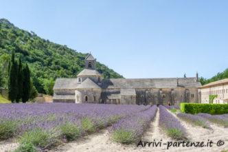 Fiori di Lavanda presso l'Abbazia di Senanque in Provenza, Francia