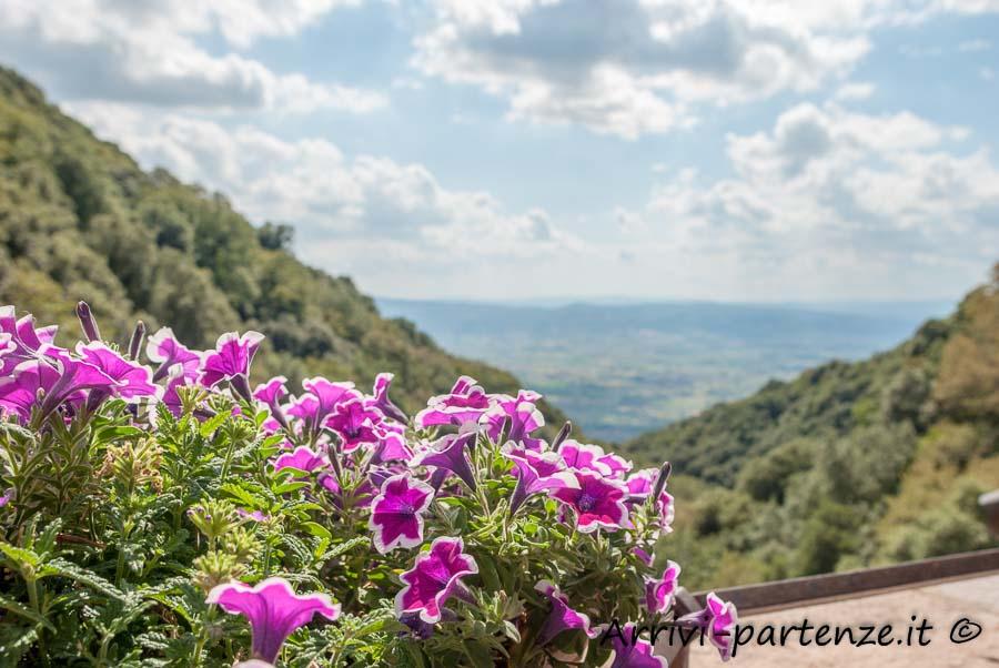Fiori presso l'Eremo delle Carceri, Assisi