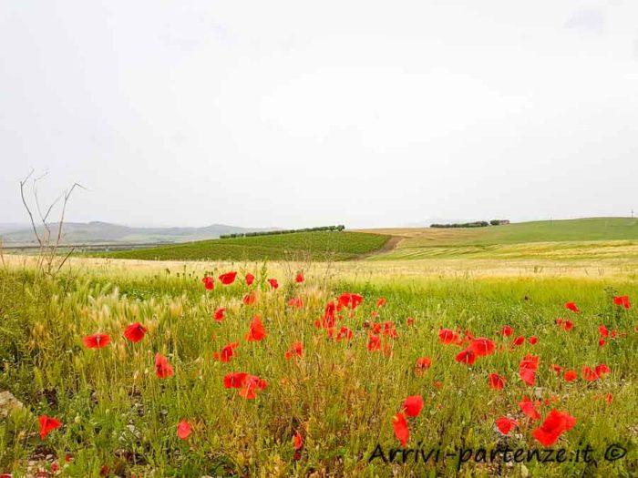 Campi fioriti nei pressi della Cripta del Peccato Originale, Matera