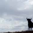 Silhouette di un toro in Andalusia, Spagna