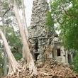 La forza della foresta, Cambogia