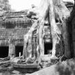 Ta Prohm, Cambogia