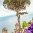 Fiori presso Villa Cimbrone a Ravello, Costiera Amalfitana