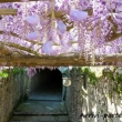 Giardino presso Villa Cimbrone a Ravello, Costiera Amalfitana