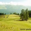Prati presso Prato Piazza, Val di Landro