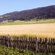 Vista bucolica nei pressi di Dobbiaco, Val Pusteria