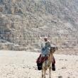 Cammello presso le Piramidi di Giza, Egitto