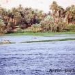 Vegetazione lungo il Nilo, Egitto
