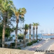Palme a Kos, Grecia