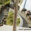 Scalinata con muli sull'isola di Santorini, Grecia