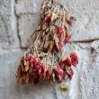 Peperoncini-Appesi-Masseria-Le-Stanzie-Supersano
