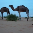Sosta notturna, Mauritania