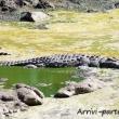 Coccodrillo, Tanzania