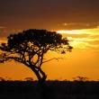 Tramonto africano, Tanzania