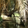 Irrigazione nelle palmeraie, Tozeur