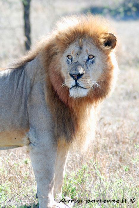 Safari in Tanzania, quando andare