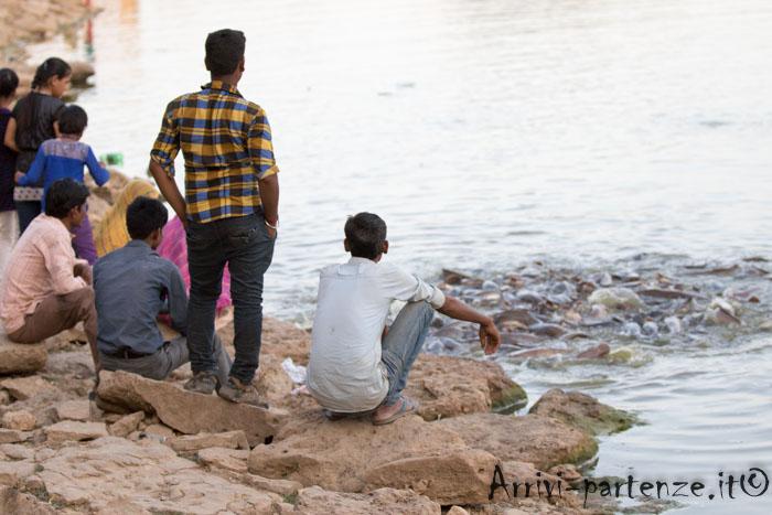 Jaisalmer, cosa vedere: pesci intenti a cibarsi presso il lago di Gadsisa