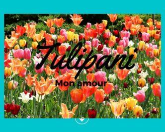 Tulipani colorati presso il Parco Sigurtà, Valeggio sul Mincio